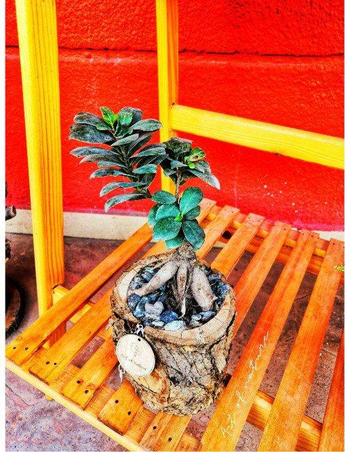 BONSAI PLANT WOOD POT